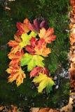 Hojas de otoño en una piedra demasiado grande para su edad con el musgo Imágenes de archivo libres de regalías