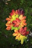 Hojas de otoño en una piedra demasiado grande para su edad con el musgo Fotos de archivo