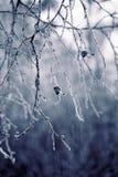 Hojas de otoño escarchadas Imagen de archivo libre de regalías