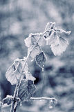 Hojas de otoño escarchadas Imágenes de archivo libres de regalías