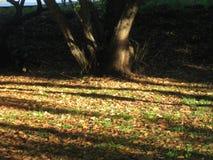 Hojas de otoño escogidas por la luz del sol fotos de archivo libres de regalías