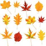 Hojas de otoño fijadas Fotos de archivo libres de regalías