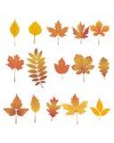 Hojas de otoño fijadas Fotografía de archivo
