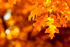Hojas de otoño, foco muy bajo Imagenes de archivo