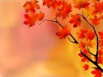 Hojas de otoño, foco muy bajo. Imagen de archivo libre de regalías