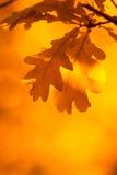 Hojas de otoño, foco muy bajo Fotografía de archivo