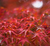 Hojas de otoño, foco muy bajo Imagen de archivo libre de regalías