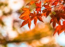 Hojas de otoño, foco muy bajo Foto de archivo libre de regalías