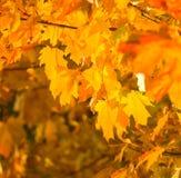 Hojas de otoño, foco muy bajo Imágenes de archivo libres de regalías