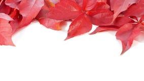 Hojas de otoño, fondos de la naturaleza, frontera blanca almacen de metraje de vídeo
