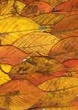 Hojas de otoño hermosas Foto de archivo libre de regalías