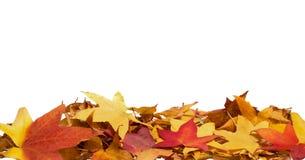 Hojas de otoño hermosas Fotografía de archivo