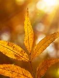 Hojas de otoño hermosas Imágenes de archivo libres de regalías