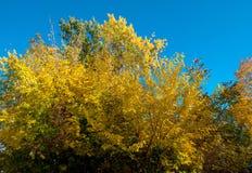Hojas de otoño hermosas brillantes imagen de archivo