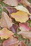 Hojas de otoño hermosas en hierba Fotografía de archivo libre de regalías