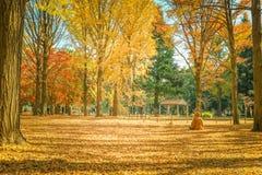Hojas de otoño hermosas de Japón en Meiji Jingu Gaien Park de Tokio imágenes de archivo libres de regalías