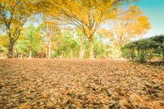 Hojas de otoño hermosas de Japón en Meiji Jingu Gaien Park de Tokio fotos de archivo libres de regalías