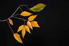 Hojas de otoño hermosas y brillantes en un fondo negro Fotografía de archivo libre de regalías