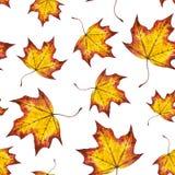 Hojas de otoño inconsútiles del modelo de la acuarela del arce Fotos de archivo libres de regalías