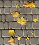 Hojas de otoño inconsútiles en los adoquines Imagen de archivo libre de regalías