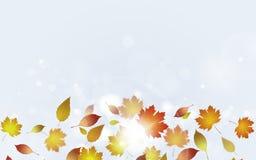 Hojas de otoño ligeras libre illustration