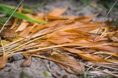 Hojas de otoño marchitadas Imagen de archivo libre de regalías
