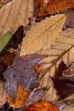 Hojas de otoño mezcladas en agua fotos de archivo libres de regalías