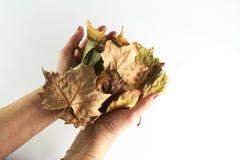 Hojas de otoño mi mano Fotos de archivo