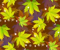 Hojas de otoño, modelo inconsútil, fondo del vector fotografía de archivo libre de regalías