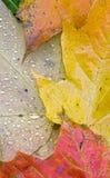 Hojas de otoño mojadas verticales imagen de archivo