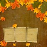 Hojas de otoño multicoloras brillantes Imágenes de archivo libres de regalías