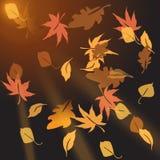 Hojas de otoño multicoloras, desmenuzando en la puesta del sol Fotografía de archivo libre de regalías