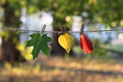 Hojas de otoño multicoloras en clothespegs fotos de archivo