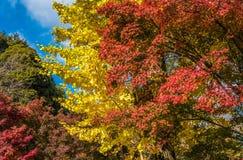 Hojas de otoño multicoloras, foco muy bajo Fotografía de archivo