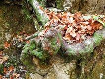Hojas de otoño, naturaleza croata, 12 Fotos de archivo libres de regalías