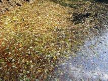 Hojas de otoño, naturaleza croata, 11 Foto de archivo libre de regalías