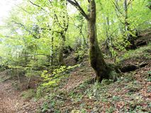 Hojas de otoño, naturaleza croata, 3 Fotos de archivo libres de regalías