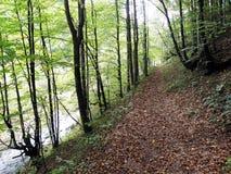 Hojas de otoño, naturaleza croata, 2 Imagenes de archivo