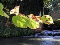 Hojas de otoño, naturaleza croata, 1 Fotos de archivo libres de regalías