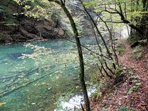 Hojas de otoño, naturaleza croata, 6 Fotografía de archivo