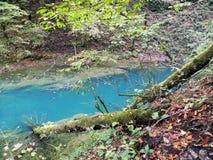 Hojas de otoño, naturaleza croata, 7 Imagen de archivo libre de regalías