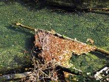 Hojas de otoño, naturaleza croata, 8 Foto de archivo