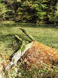 Hojas de otoño, naturaleza croata, 9 Fotografía de archivo