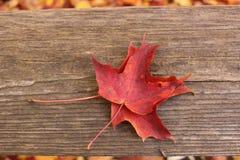 Hojas de otoño originales foto de archivo libre de regalías