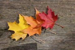 Hojas de otoño originales imagen de archivo libre de regalías