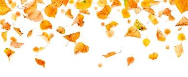 Hojas de otoño panorámicas Imagen de archivo libre de regalías