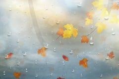 Hojas de otoño para el vidrio lluvioso Fondo del otoño de la naturaleza con las gotas de agua en la ventana, rama de Realistiac d Fotografía de archivo