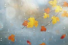 Hojas de otoño para el vidrio lluvioso Fondo del otoño de la naturaleza con las gotas de agua en la ventana, rama de Realistiac d Foto de archivo libre de regalías