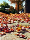 Hojas de otoño, perspectiva de la hormiga Fotos de archivo