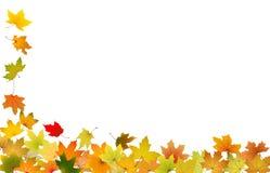 Hojas de otoño que caen Imágenes de archivo libres de regalías